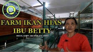 Download Video Farm ibu betty pondok cabe tangerang #Liputan Khusus MP3 3GP MP4