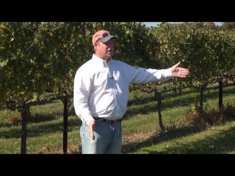 Yadkin Valley Wine Tours -  Vineyard 101