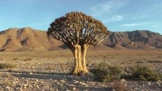 Dies ist der komplette Reisebericht über alle Tage unseres Namibia-Aufenthalts. Es war sehr schön uns es gab einiges zu sehen.
