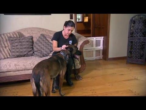 Cesar Millans Dog Nation | Season 1 Episode 7 | Philadelphia Freedom