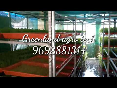 Greenland agro tech Open air Hydroponics fodder system 9698881314