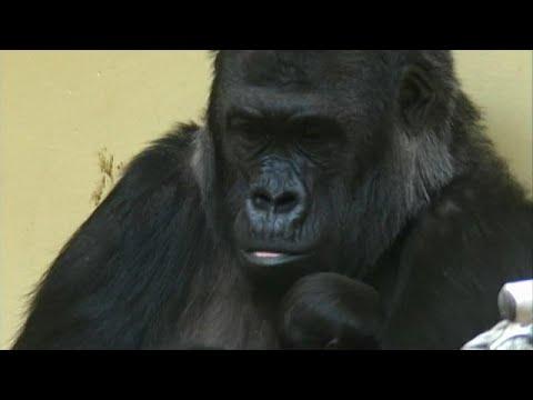 Krefeld: 3 Frauen sind für den Tod von über 30 Affen  ...