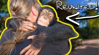 Video CHIMPANZEE REMEMBERS ME AFTER AN ENTIRE YEAR???   BRIAN BARCZYK MP3, 3GP, MP4, WEBM, AVI, FLV Agustus 2019