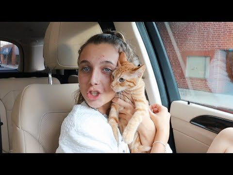 Download I DID SOMETHING CRAZY (i adopted a cat....) HD Mp4 3GP Video and MP3
