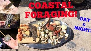 Video COASTAL FORAGING, Clams , Lobsters, Abalone , Cook up On The Beach! MP3, 3GP, MP4, WEBM, AVI, FLV Agustus 2019