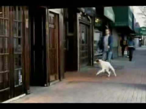 Anuncio de la cerveza Heineken con un perro - Funny beer commercial with a dog