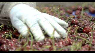 Drone-Captured Cherry Packing at the new McDougall & Sons Baker Flats Facility