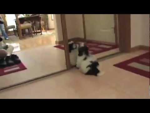 drole - drôle de vidéo! des animaux domestiques qui découvrent le miroir pour la première fois Kittens And Puppies Discovering The Mirror funny animals.