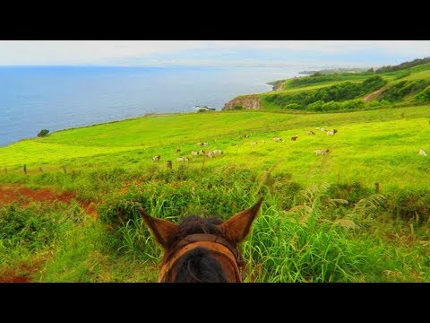 HORSE BACK RIDING IN MAUI!!! MAUI DAY 6 | Haleina Marie