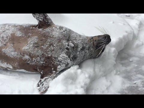 這一家動物園因大雪暫停營業,員工滑雪「前往探看動物狀況後」不敢相信眼前的景象!