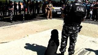 Demonstração com cão da Policia Militar apresentação em Mandaguari