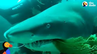 Scuba Diving Instructor Saves Shark Trapped In Fishing Net | The Dodo by The Dodo