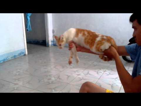Cat Gun, So Funny, LOL!!!