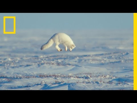 The Unsung Heroes of the Arctic - Ep. 3   Wildlife: The Big Freeze
