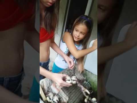 Beatriz e Lívia limpando carangueijo em Cananéia