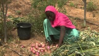 Accès à l'eau et à la terre - Clubs Dimitra au Niger.