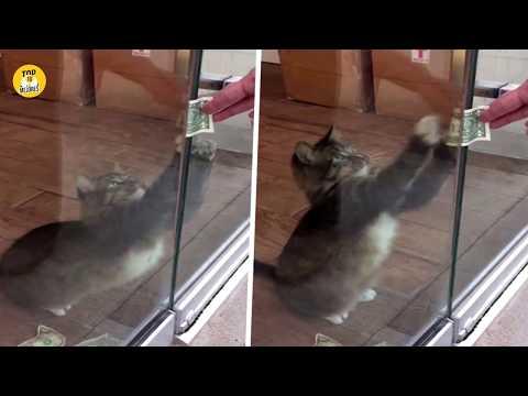 Este gato le roba dinero a desconocidos por esta razón видео