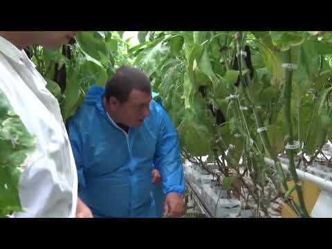 Об обследовании тепличного комбината закрытого грунта в Ростовской области
