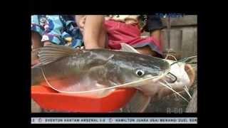 Video Menjemput Fajar: Pencari Ikan Baung MP3, 3GP, MP4, WEBM, AVI, FLV April 2019
