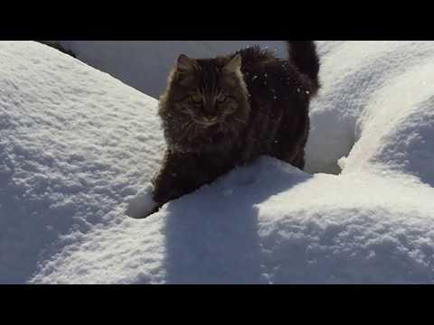 vera-la-gattara-di-istanbul-che-protegge-i-mici-dal-gelo