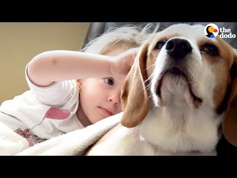 Girl Surprises Her Beagle Dog With A Puppy Sister | The Dodo Mp3