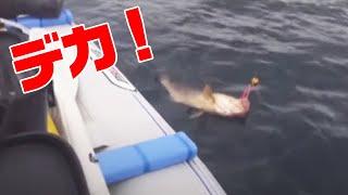 第47回シティーコムTV|長崎生月ボートジギングキジハタ編