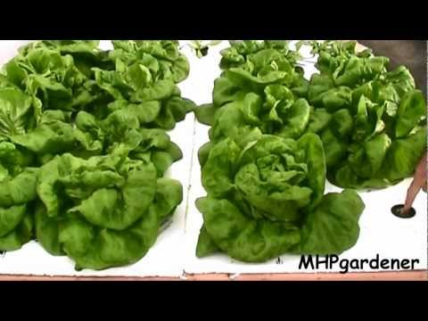 Easy Hydroponics – Anybody Can Do This