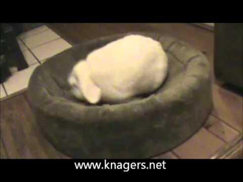 zoemend konijn
