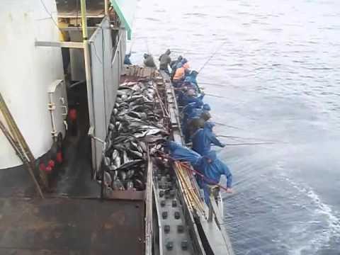 Câu cá ngừ quá dễ luôn - fishing tuna easy