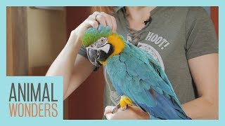 Bird Molting by Animal Wonders