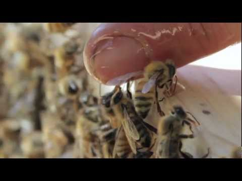 How To Start A Bee Sanctuary