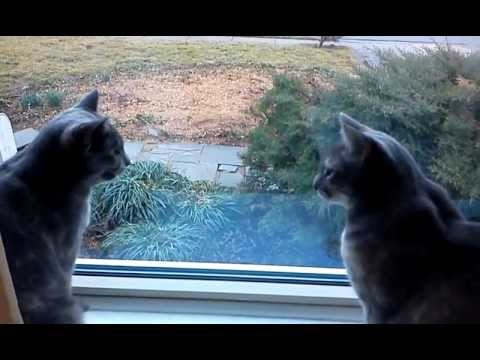 WATCH: Two Cats Have a Conversation
