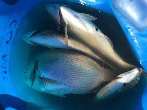 pesca a bolognese nel porto di ortona