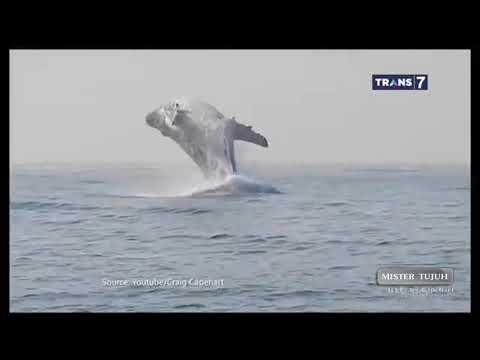 VIDEO Mengerikan Dalam Air ---- On The Spot ( 14/03/19 )