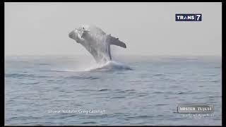 Video VIDEO Mengerikan Dalam Air ---- On The Spot ( 14/03/19 ) MP3, 3GP, MP4, WEBM, AVI, FLV Mei 2019