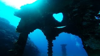 Yoron Japan  city pictures gallery : 【GoPro】与論島ダイビング - ウミガメと宮殿, Diving in Yoron island of Japan, 2016 summer
