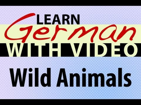 Learn German with Video – Wild Animals