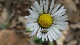 كيف يقوم النحل بنقل حبوب اللقاح بين النباتات