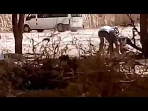 Kavga (dehşet dolu anlar)  +18 (видео)