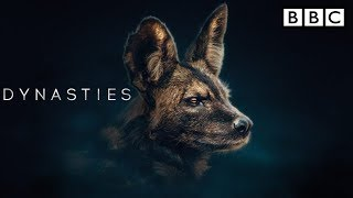 BBC America Dynasties wild dogs | BBC Dynasty trailer | Painted Wolf | Episode 4 - The Rebel