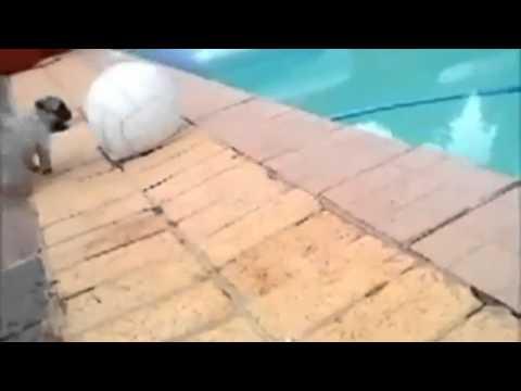 Cute Pug Fail
