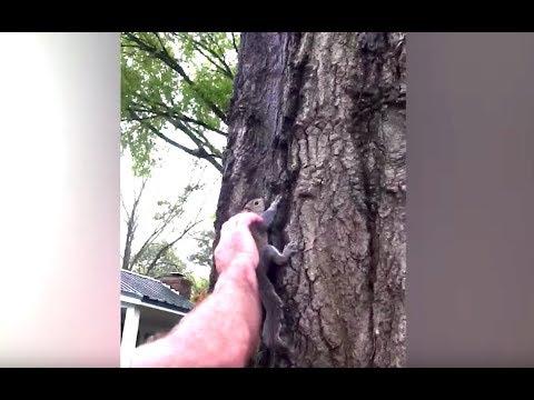 Starszy Pan wypuszczą na wolność wiewiórkę, którą przywrócił do życia. Niesamowita końcówka
