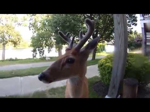 Camera - A deer walks up to me and licks the lens of my ContourROAM2 on my porch.