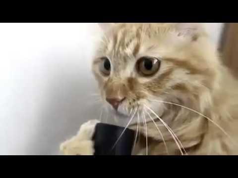 il gatto contro l'aspirapolvere!