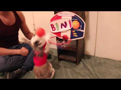 Funny Bunny Plays Basketball - Bini The Bunny