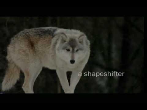 Eternal Moon Rebecca York Book Trailer
