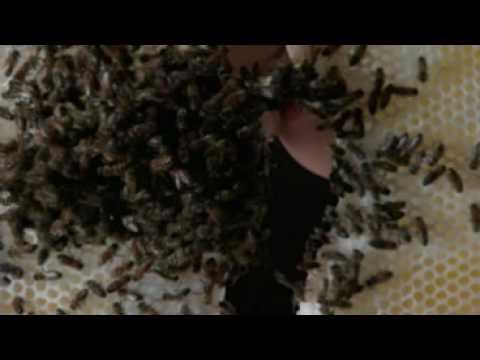 Cremaster 2 (Opening Scene)