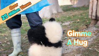 Панда очень любит обниматься