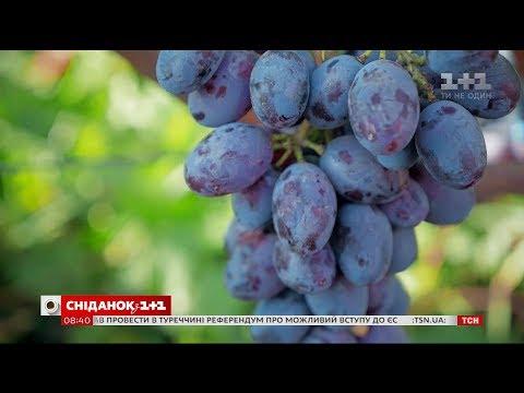 Скільки коштує виноградник і як заощадити на його облаштуванні - Зелена ділянка