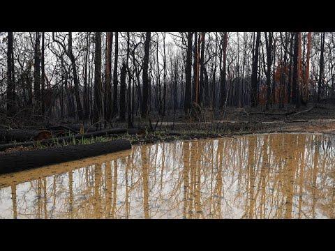 Australien kämpft nach der Dürre nun mit Überschwemmungen
